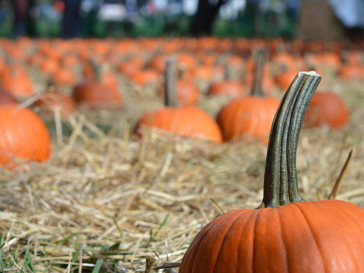 Every fall festival worth going to in NYC