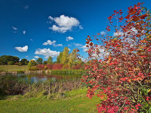 Go birdwatching at London Wetland Centre