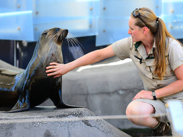 Melbourne zoo seal and trainer