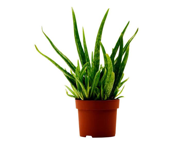 Compre umas plantas: fazem muita companhia