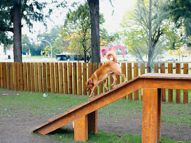 Conheça amigos de duas e quatro patas no jardim do Campo Grande