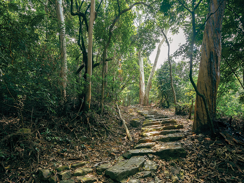 Hiking trails for families in Hong Kong