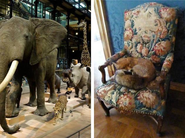 Musée d'Histoire Naturelle > Musée de la Chasse et de la Nature