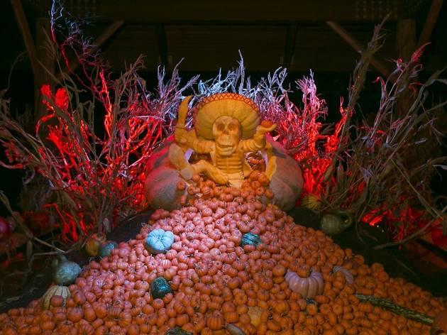 Giant Pumpkin Weekend at NYBG