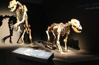 espèce ours (© C.Gaillard)