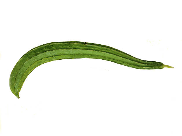 Luffa