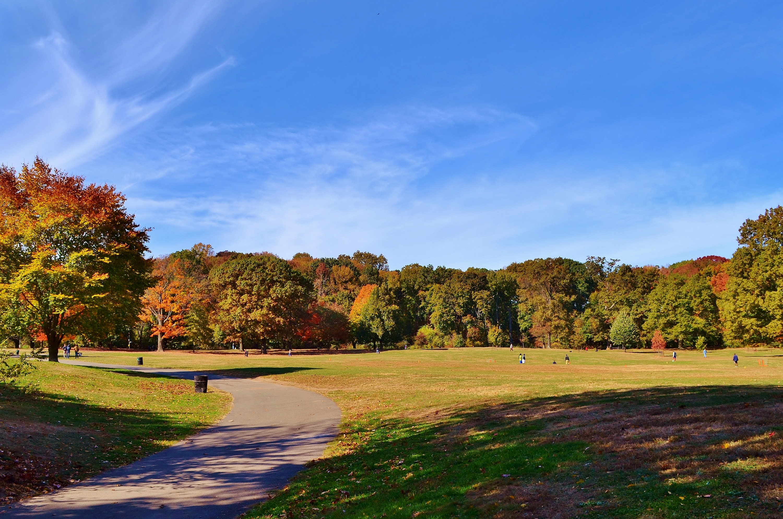Fall Foliage Walk: Trees of Prospect Park