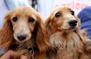 Two dogs looking to camera