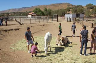 Farm Sanctuary