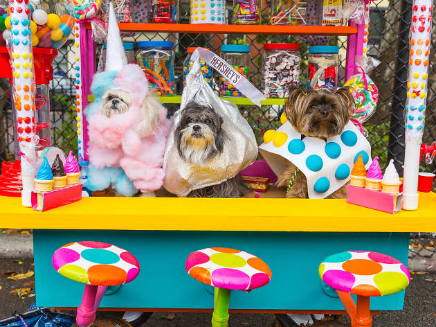 Look At These Adorable Puppies From The Tompkins Square Halloween