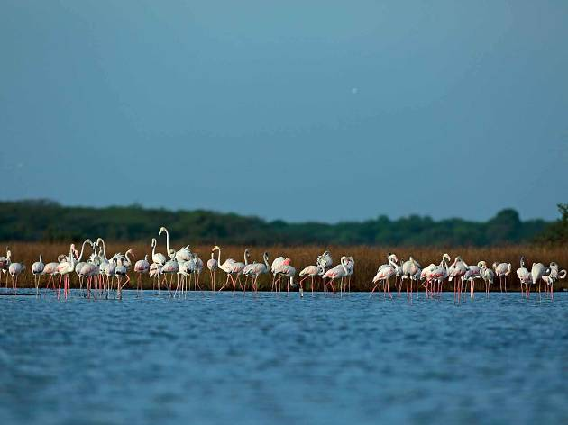 Chundikulam bird sanctuary