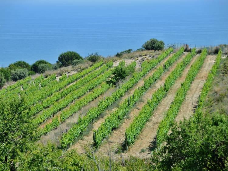 Tarda dia 1: vinyes i vi