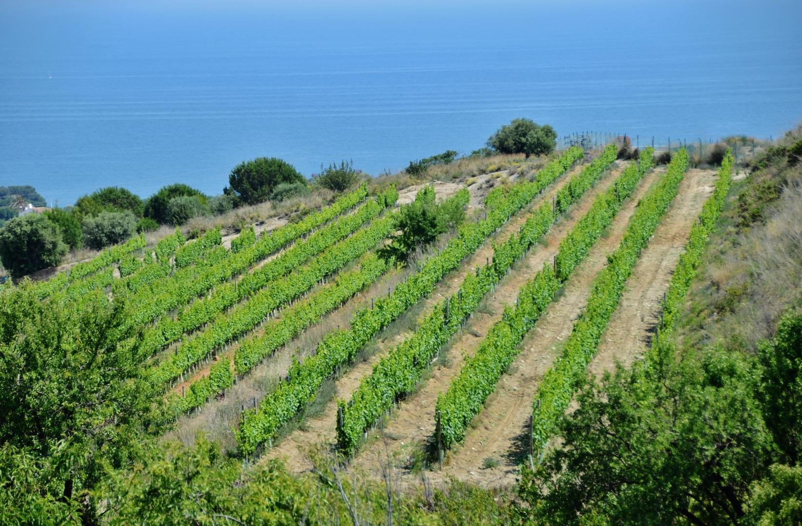 Vinyes d'Alella