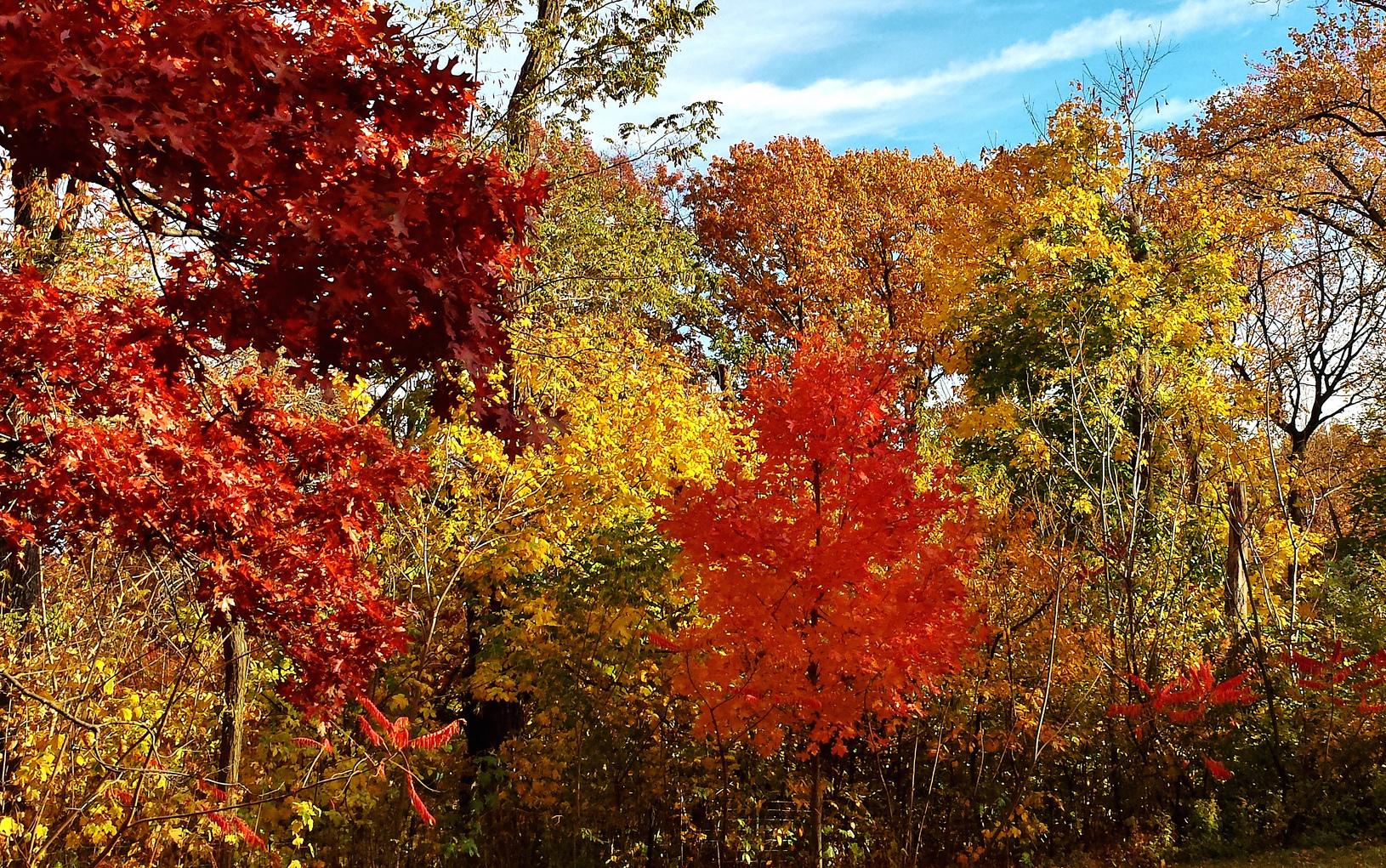 Randall's Island is hosting free foliage walks this fall