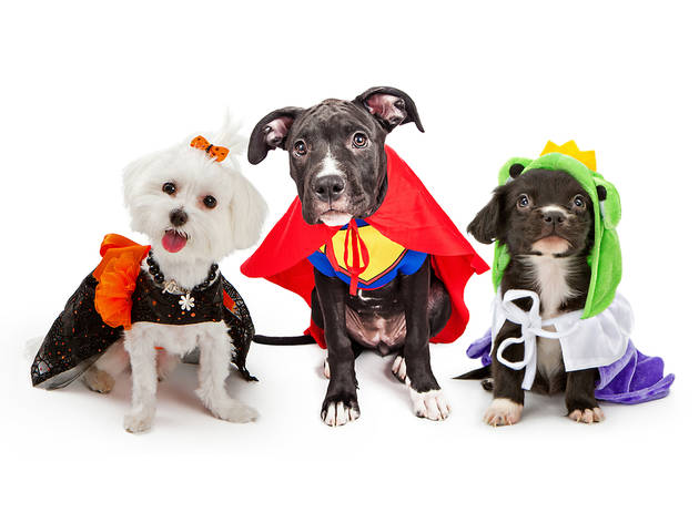 Where to celebrate Halloween with your dog in Miami