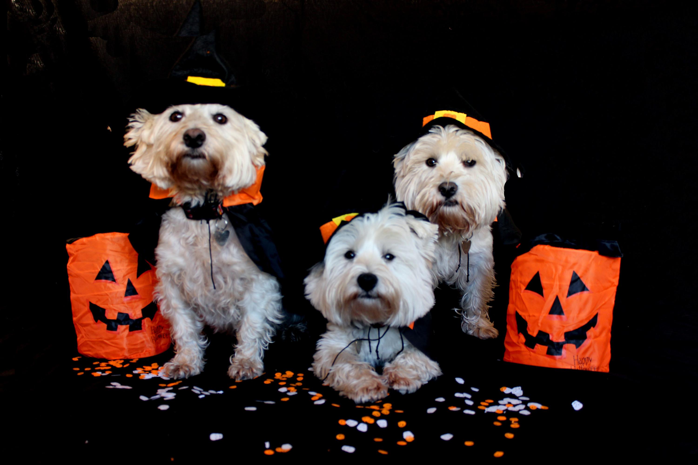 Cãominhada de Halloween