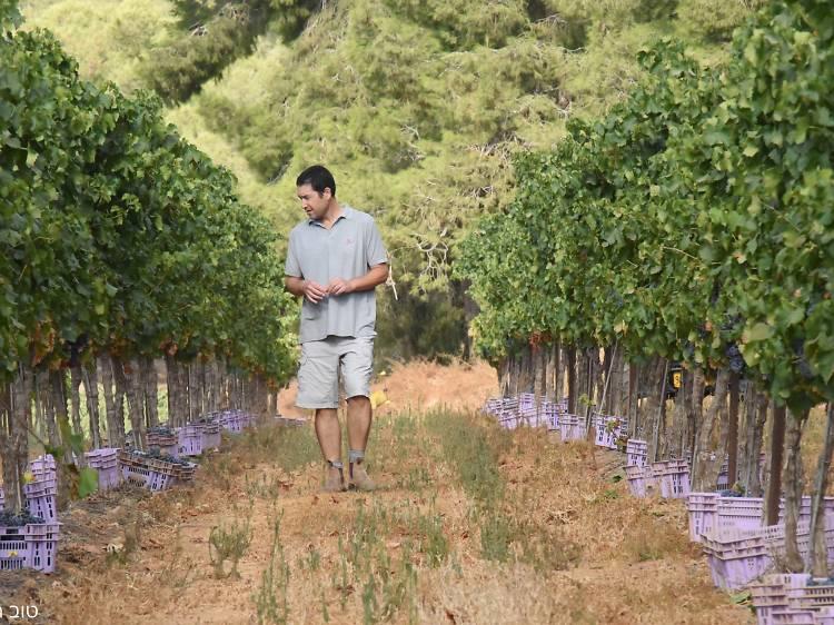Yatir Winery
