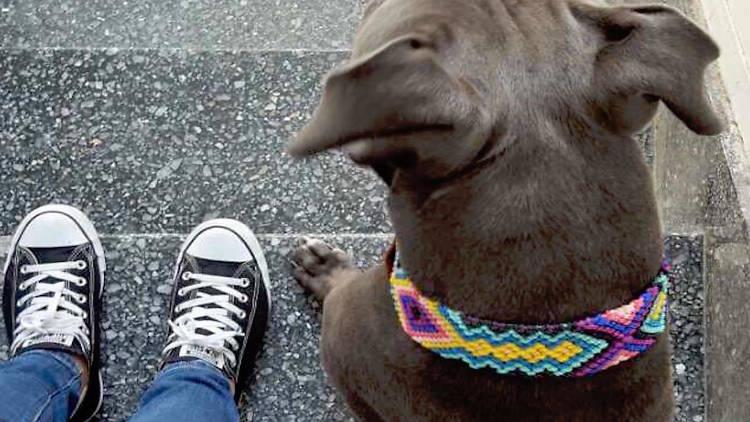 Collares artesanales para perros Verama