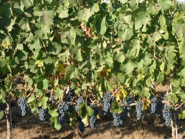 Maor Winery