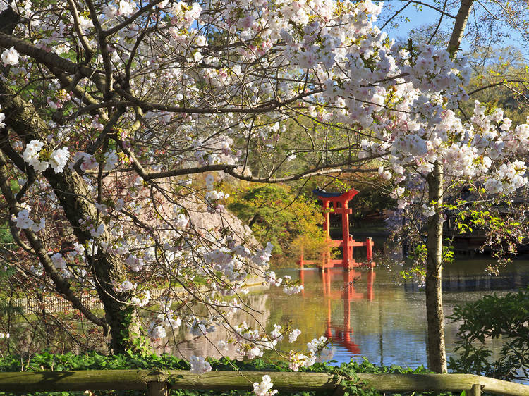 Bask in the beauty of the Brooklyn Botanic Garden