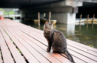Public cats of Tokyo: Benkeibashi | Time Out Tokyo