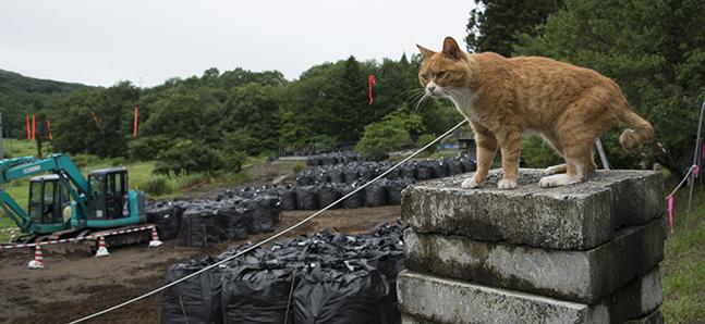 Fukushima's clean-up crisis