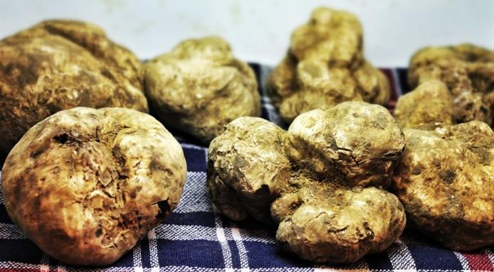 5 Hong Kong white truffle menus to try now - DiVino Group