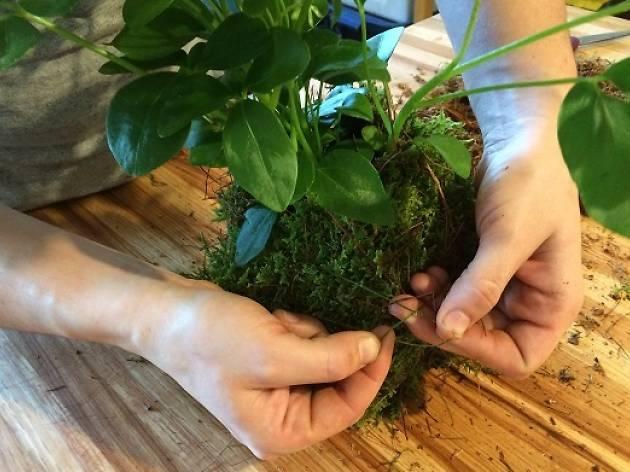 Kokedama: Hanging Garden Workshop