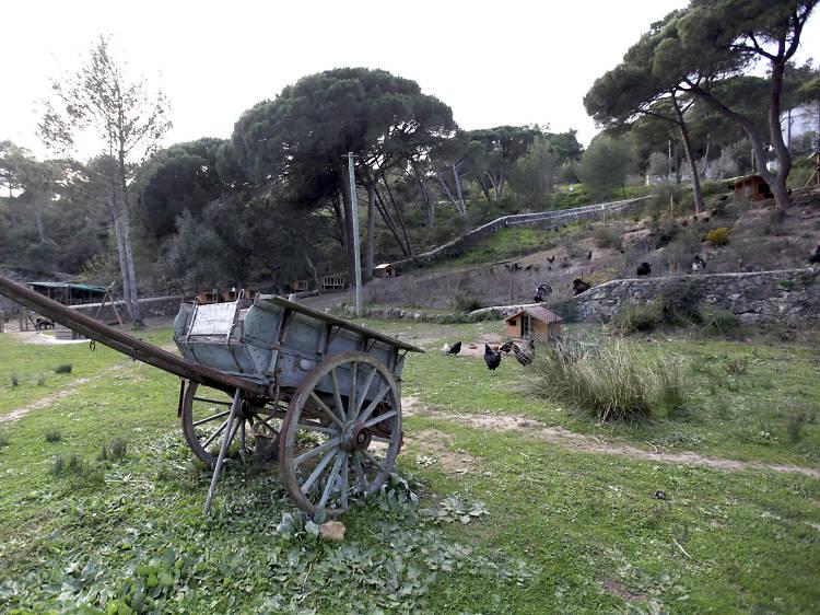 Ir ao campo sem sair da cidade nas quintas pedagógicas em Lisboa