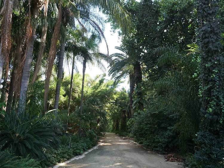 Tropical Gardens (Park Hayarkon)