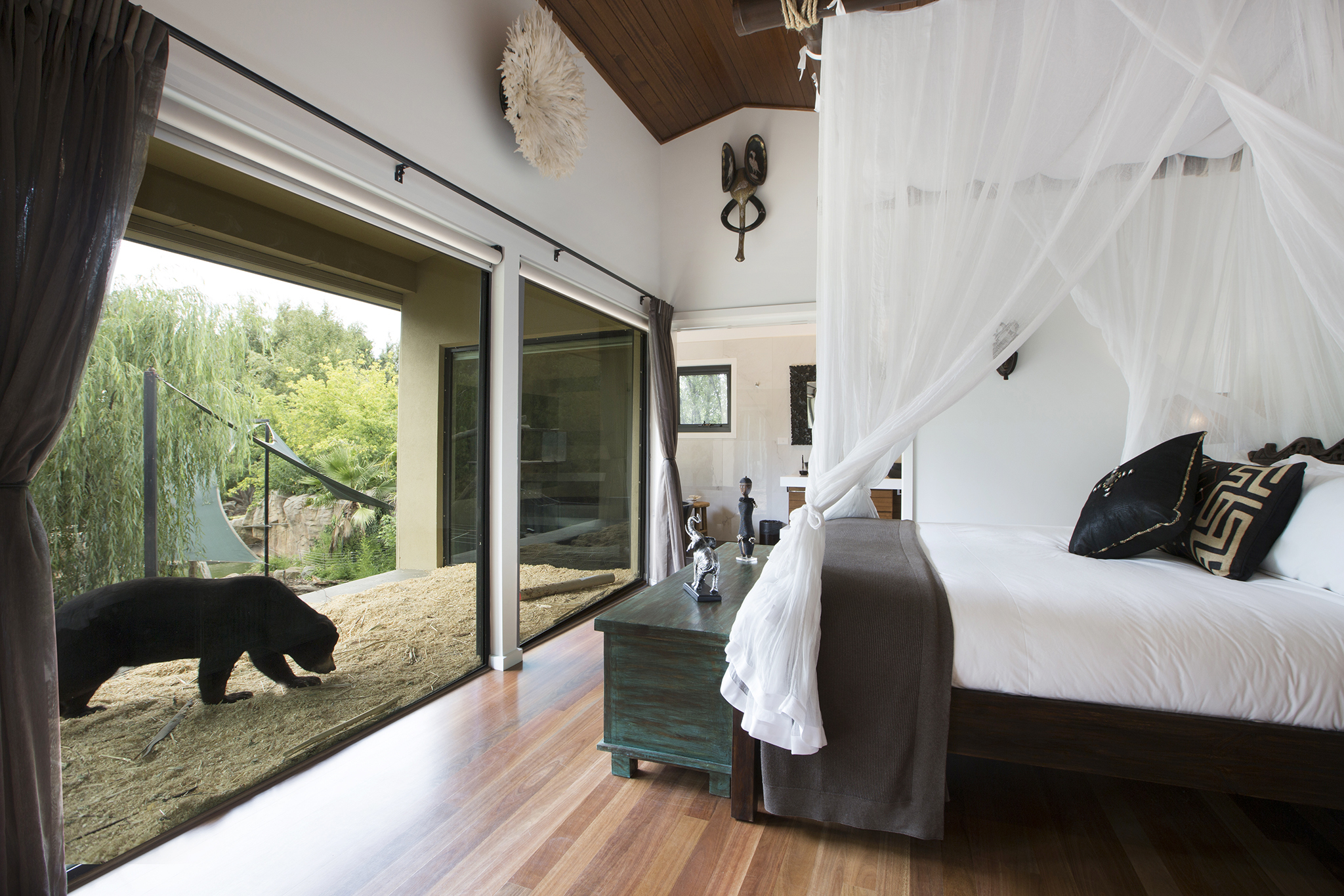 A bear stands near a four poster bed at Jamala Wildlife Lodge