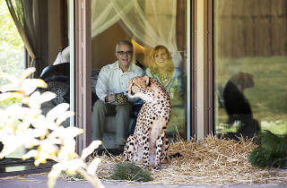 People stare at a cheetah at Jamala Wildlife Lodge