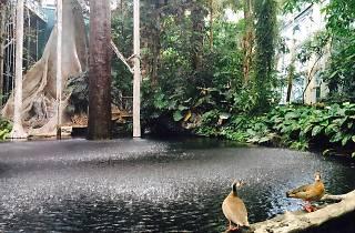 El bosc inundat