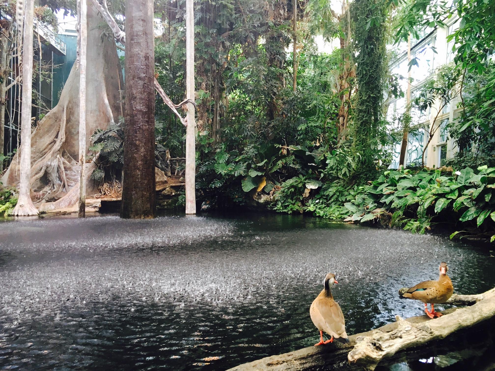 ¿Cómo es posible un Amazonas en Barcelona?