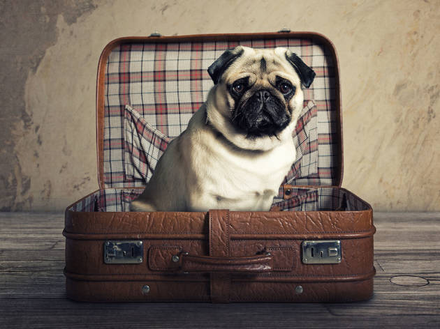 The best pet-friendly hotels in London