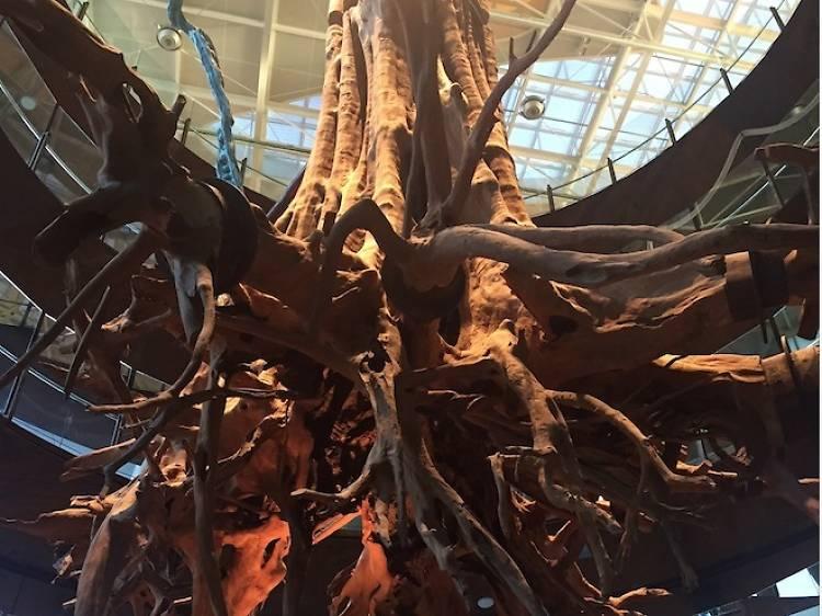 L'arbre suspès