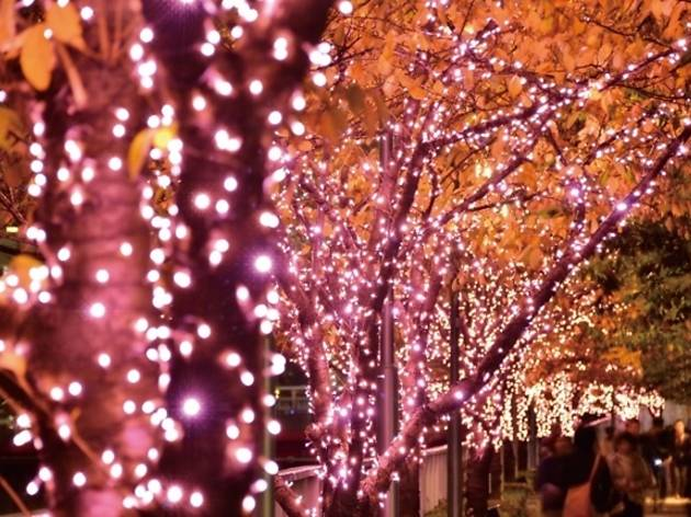 Meguro River Illumination 2016 Things To Do In Tokyo