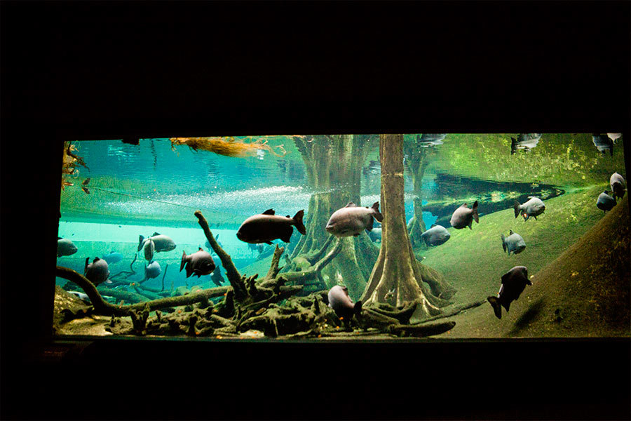 Bosc Inundat