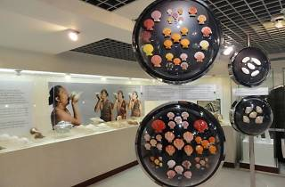 Bangkok Sea Shell Museum