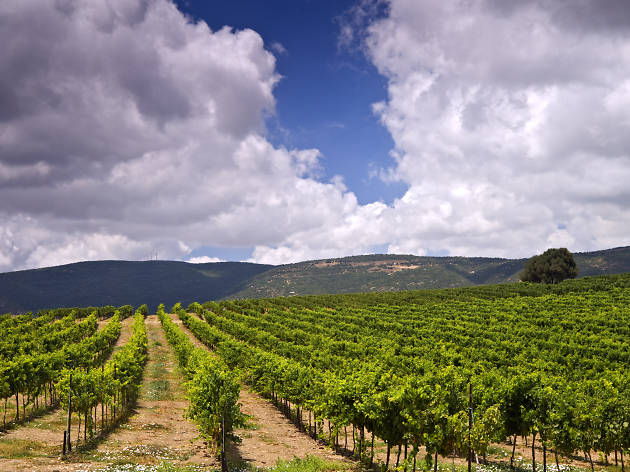 The Galilee and Golan Heights' top restaurants and vineyards