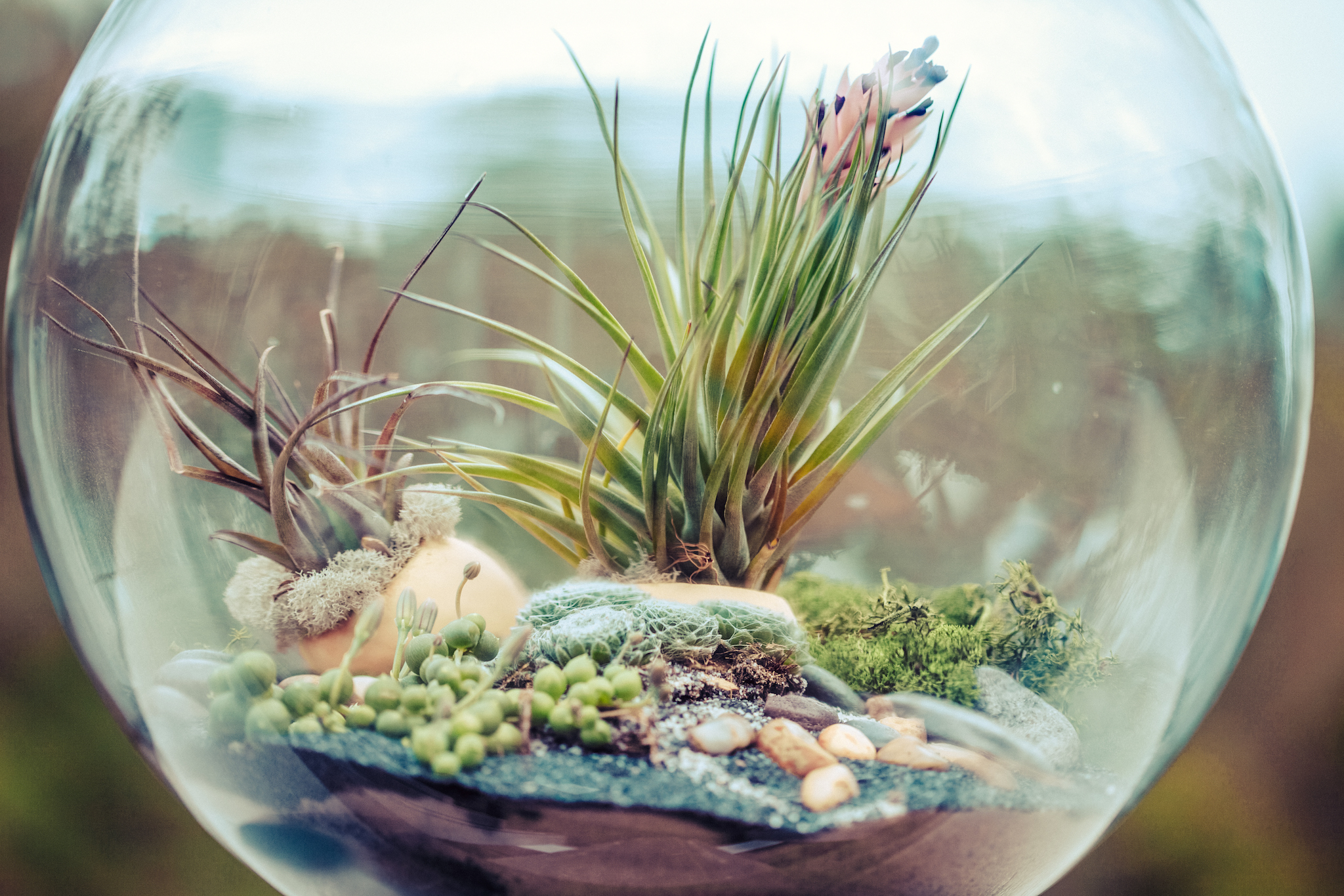 Create your own miniature terrarium