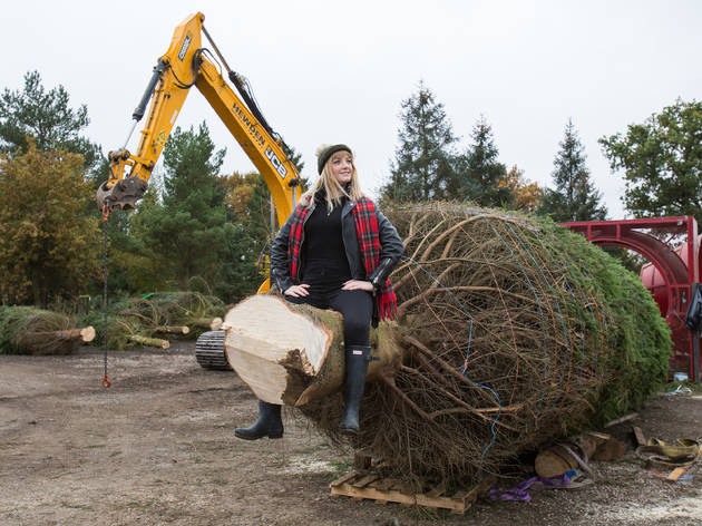 Timberrrrr: Eight things we learned chopping down Covent Garden's Christmas tree