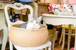 Public Cats of Tokyo: Magenta Magenta | Time Out Tokyo
