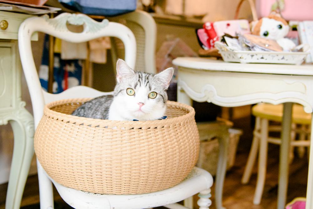 Public cats of Tokyo: Magenta Magenta, Harajuku