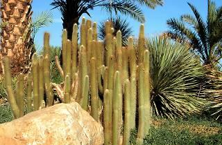 Le Jardin Botanique d'Ein Gedi