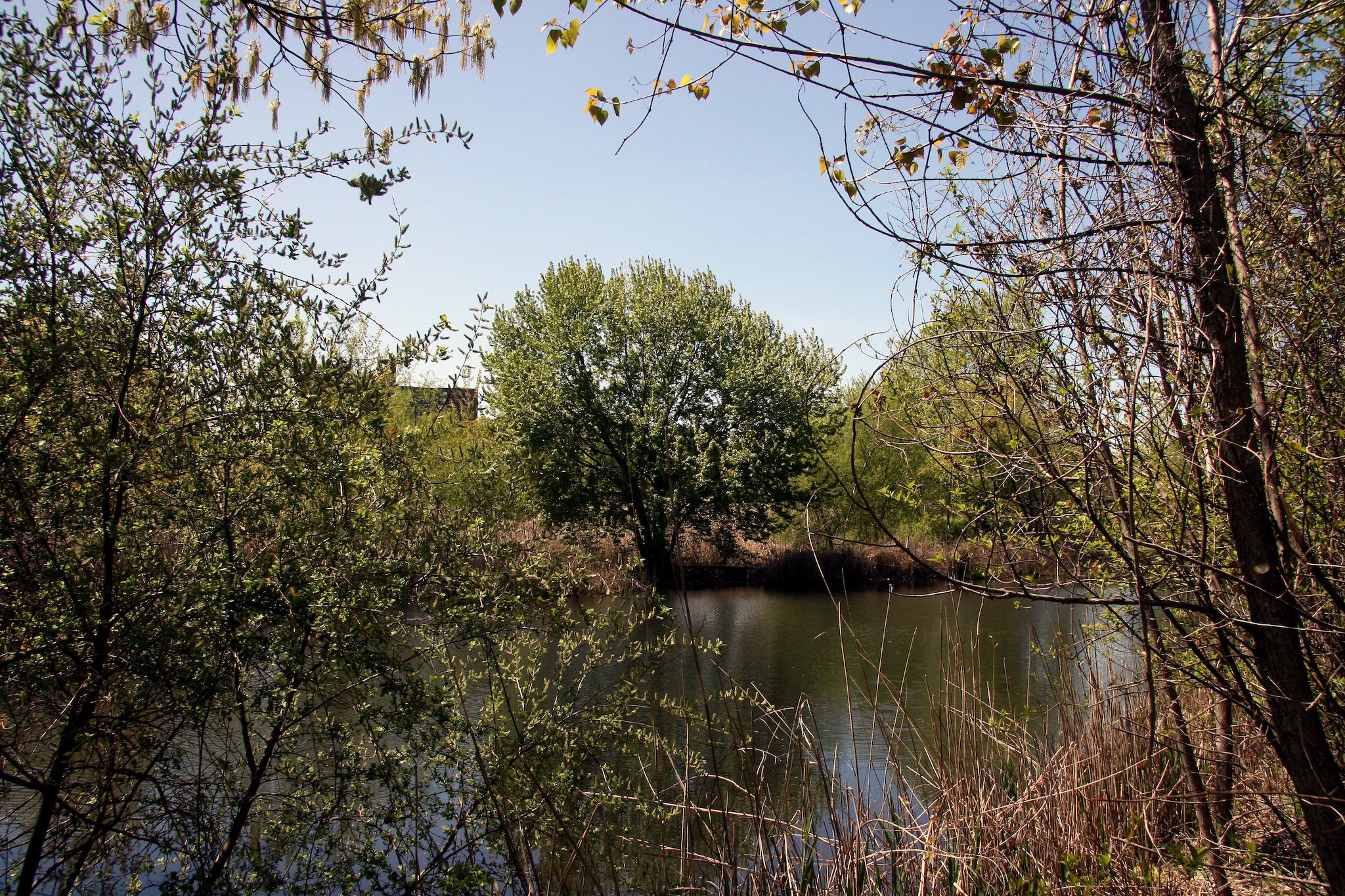 Alley Pond Park
