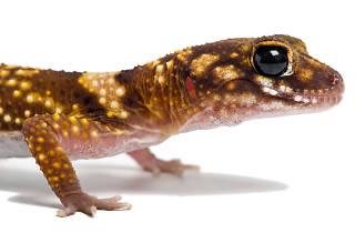 Reptiles como mascota para niños
