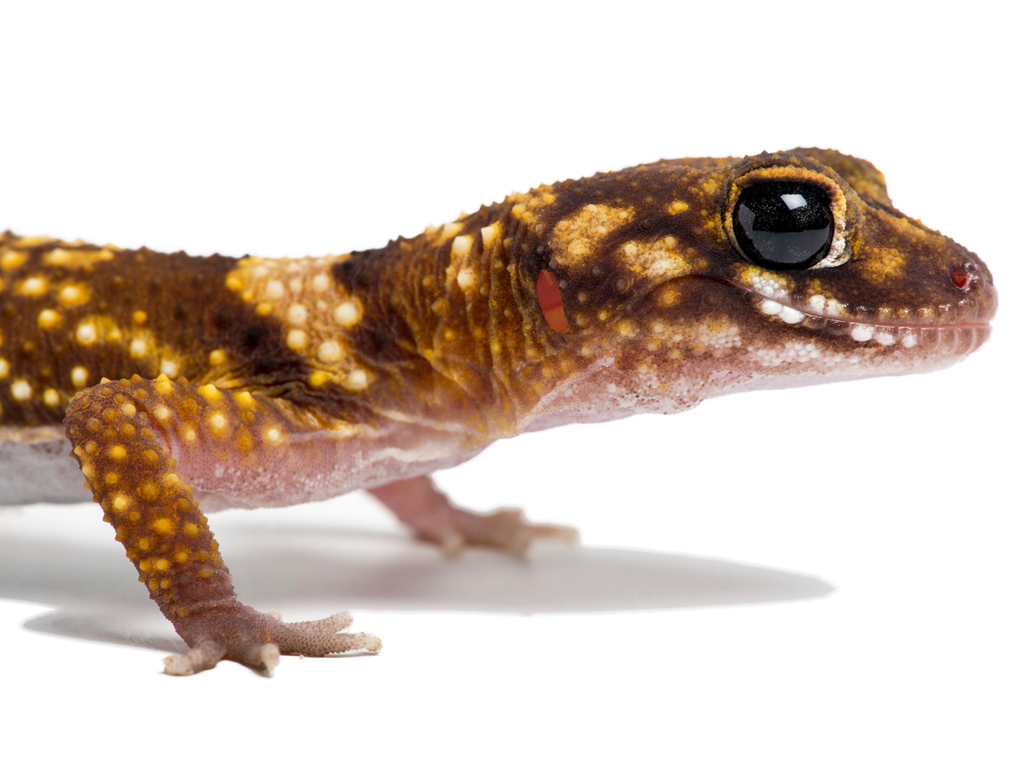 Reptiles como mascotas para niños