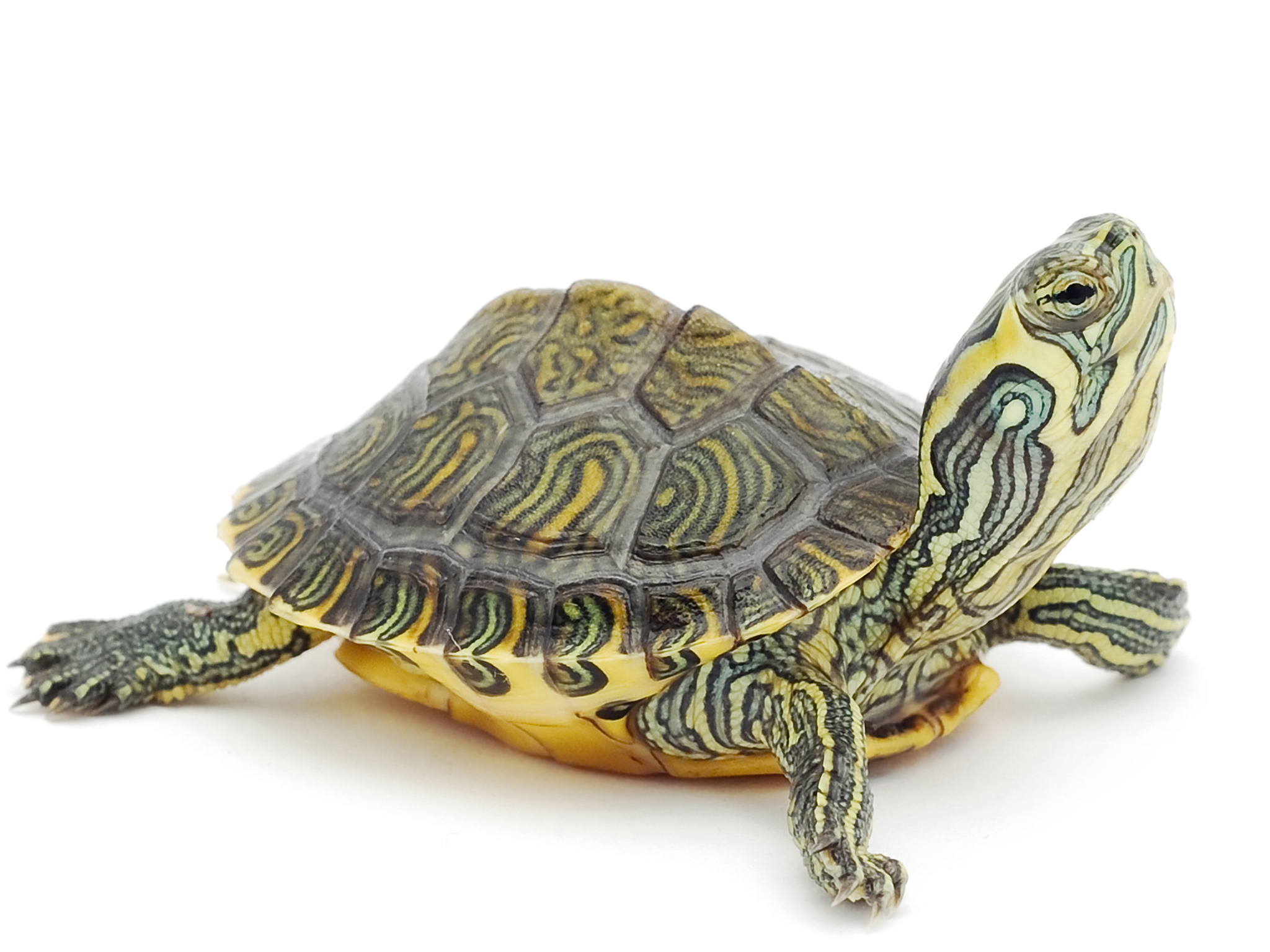 Tortugas y reptiles para niños