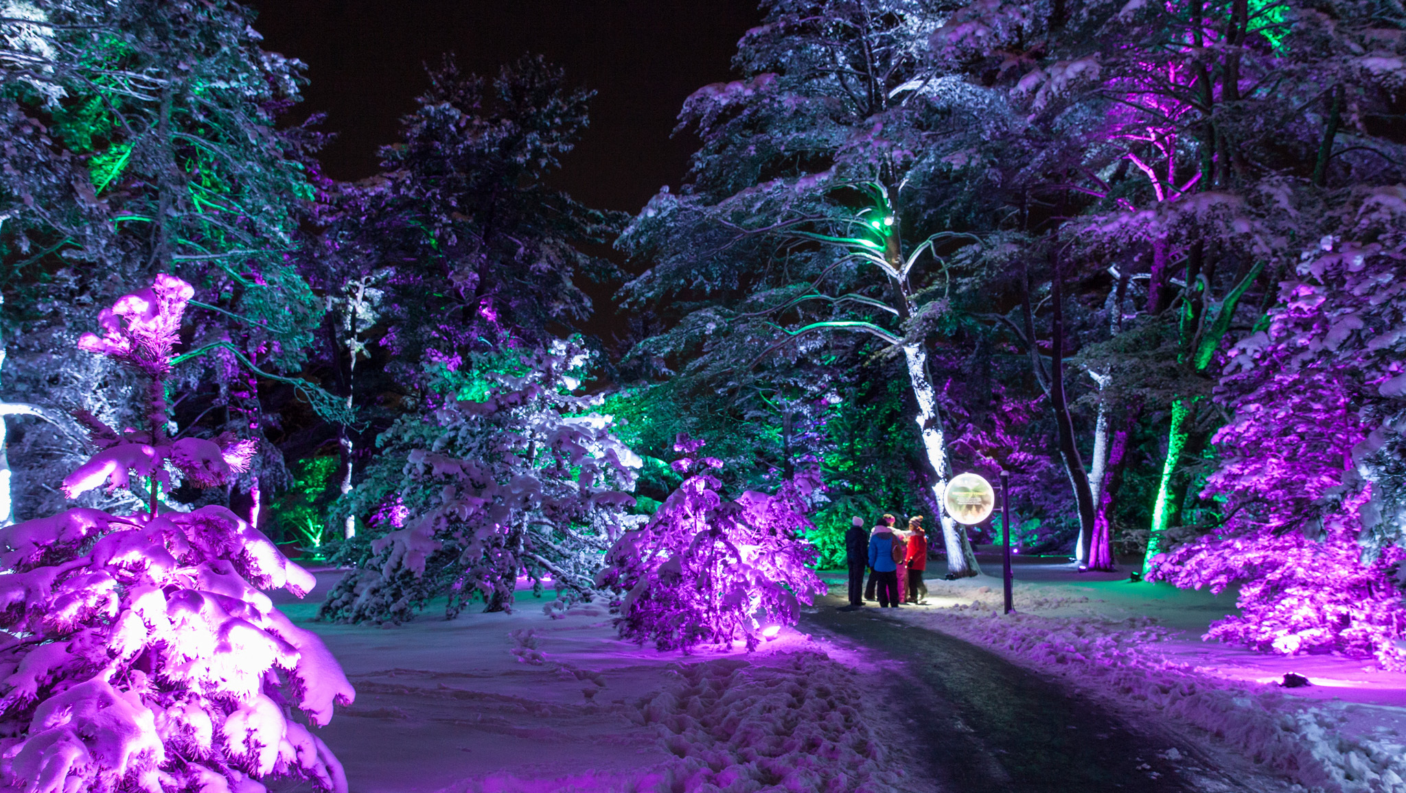Illumination: Tree Lights at Morton Arboretum
